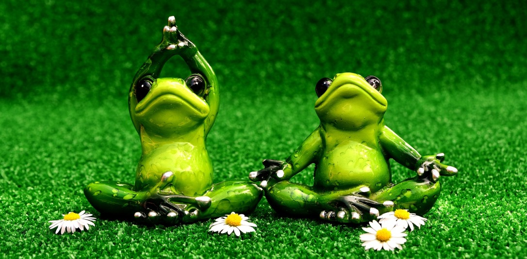 frogs-2403525_1920
